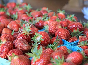 Strawberries, grown chemical-free by Kilgore Family Farm
