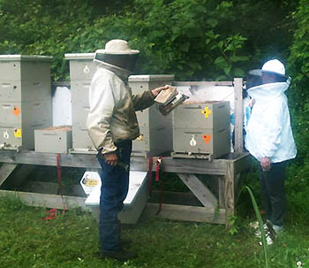At Horn Farm Center, Mark Gingrich, onsite beekeeper, and Susan Wolfe, Incubator Farms Project beekeeper, use smoke to calm the bees.