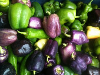 green and purple sweet peppers