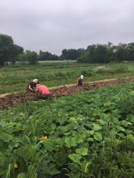 Horn Farm Work Crew