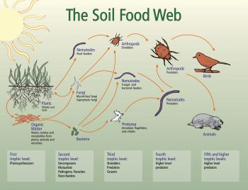 soil food web diagram from NRCS