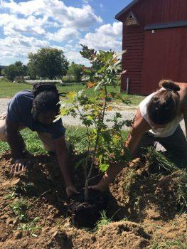Oak Grove Planting