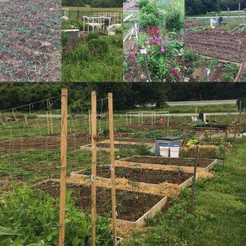 Horn Farm Community Gardens