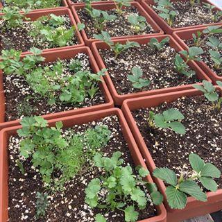 herb pots for plant sale