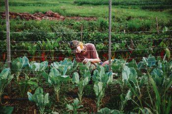 farm intern kelsey 2018