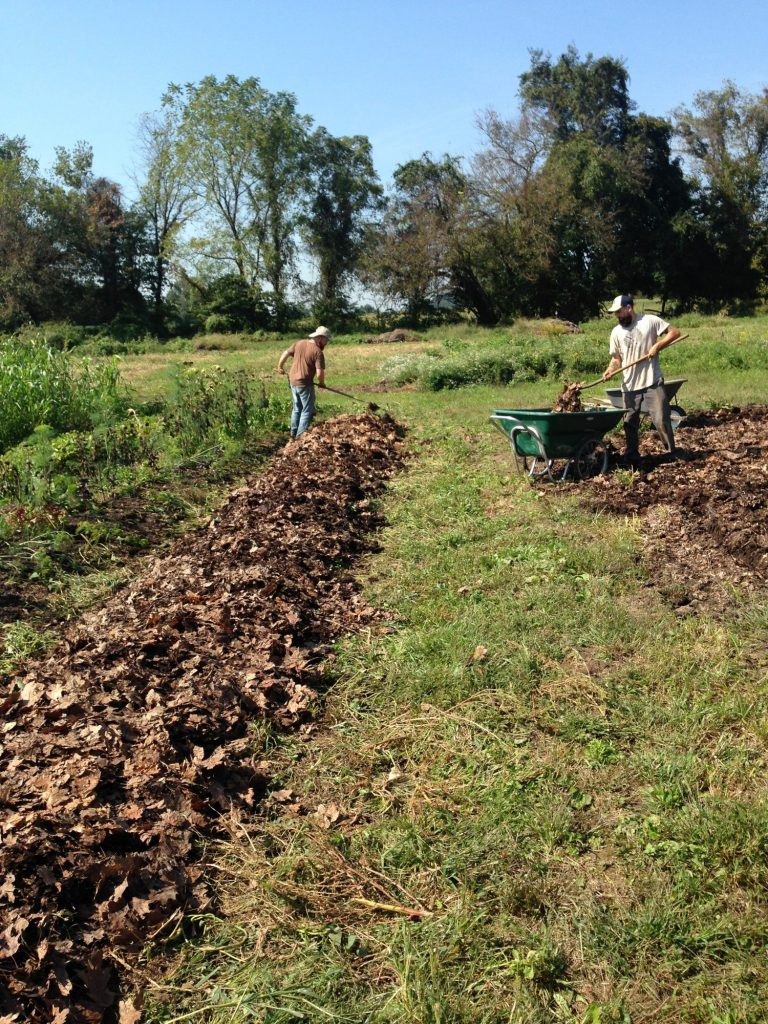 mulching raised beds
