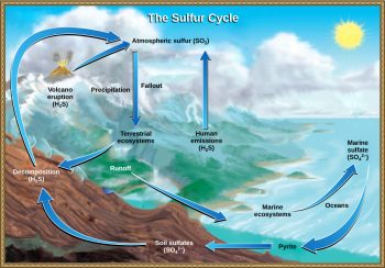 sulfur cycle