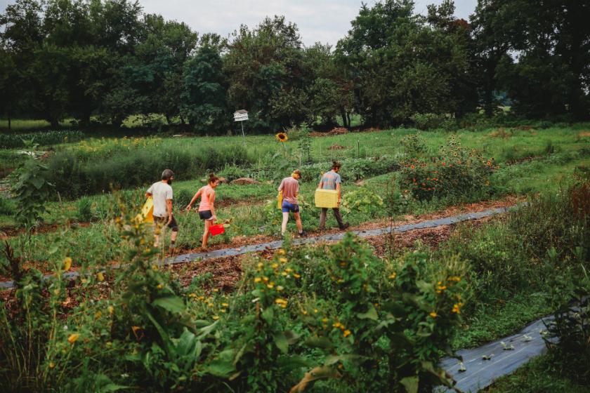 2018 farm interns harvest