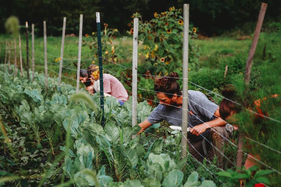 farm internship 3