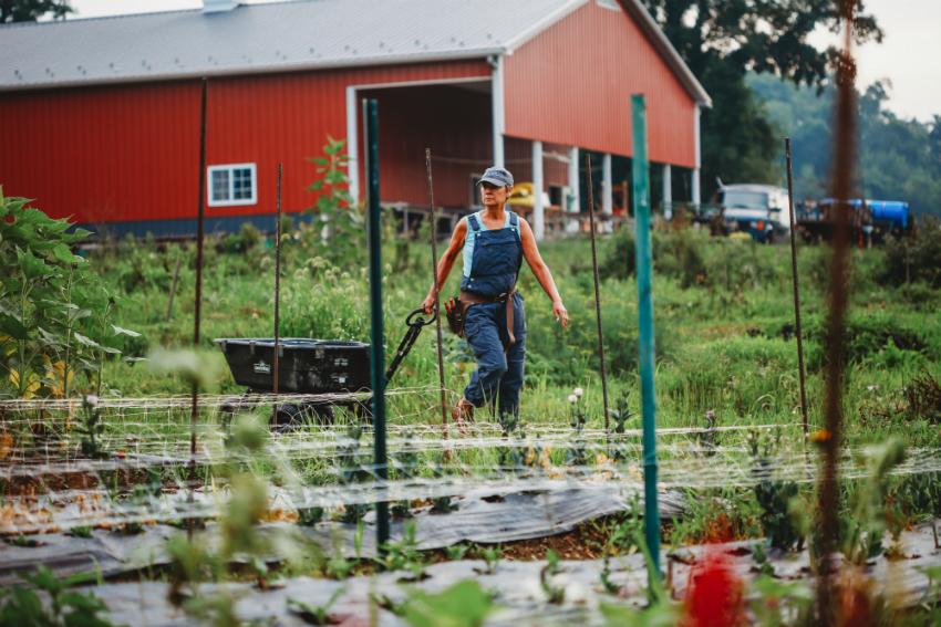 incubator farm