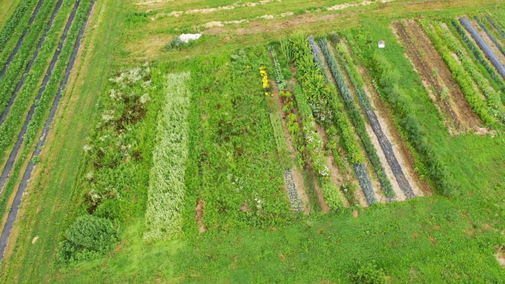 Betsy's Flowers at the Farm from the air