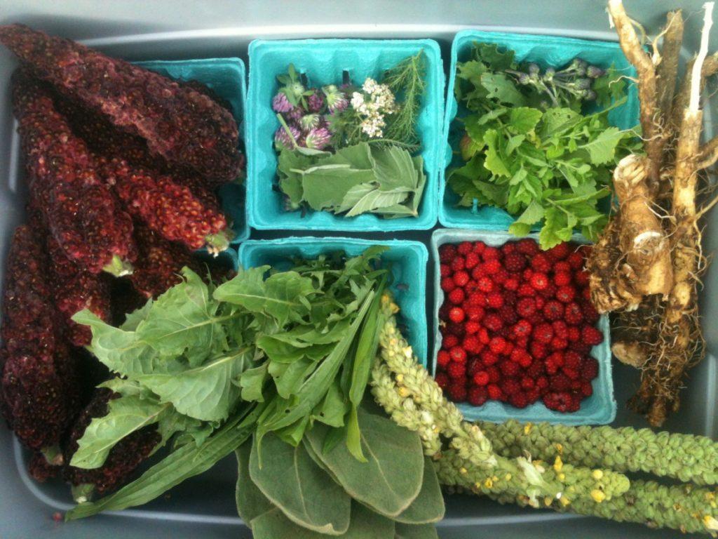 foraged wild foods